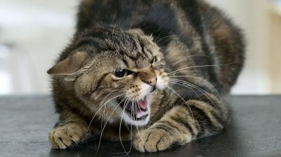ВРязанском районе заболевшая бешенством кошка искусала несколько человек
