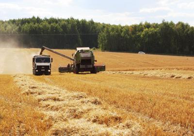 Приднестровские аграрии собрали 359 тыс.  тонн озимой пшеницы