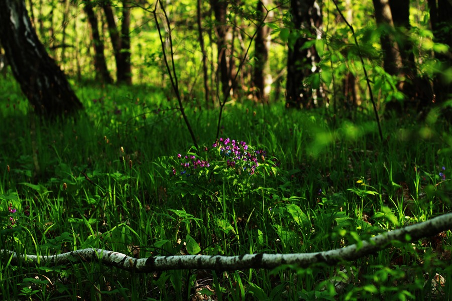 Драл ее в лесу фото 10
