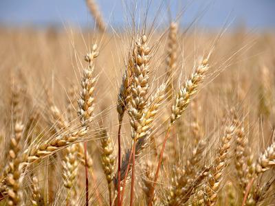 Орловщина собрала практически 3 млн. тонн зерна