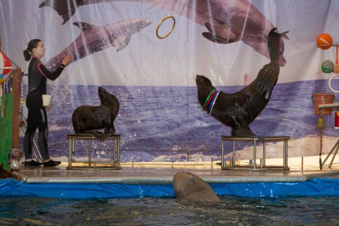 материал пригоден дельфинарий в рязани фото зря