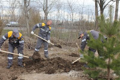 РНПК выстроила зеленую изгородь впосёлке Турлатово